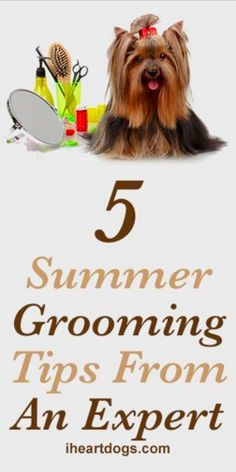 5 Summer Grooming Tips From An Expert