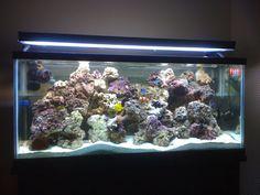 Need 55 Gallon Reef Setup