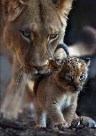 Resultado de imagen para tatuaje de leona y cachorro