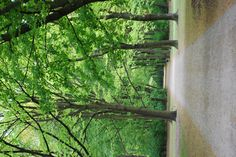 I miss strolling through the Tiergarten