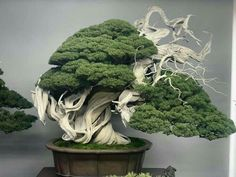 """Can you say bonsai GOALS? Happy bonsai fact: Literally translated """"bon-sai"""" means planted in a container. Bonsai Tree Care, Bonsai Tree Types, Indoor Bonsai Tree, Mini Bonsai, Bonsai Trees, Bonsai Soil, Bonsai Plants, Bonsai Garden, Garden Plants"""
