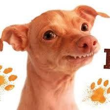 Výsledek obrázku pro kofola hry Tuna Dog, Famous Dogs, Tuna Melts, Dog Names, Cute Dogs, Funny Animals, Puppies, Humor, Pho