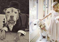 Como incluir seu cão na cerimônia de casamento - Ribeirão Preto | Clicou Festas