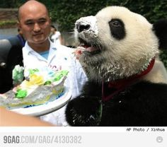 Happy Birthday Panda!
