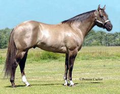 Concord Music • Son of Snipper Music. 1996 AQHA Grulla Stallion    Foundation Bloodlines