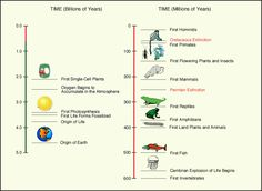 Timeline of earth and its life