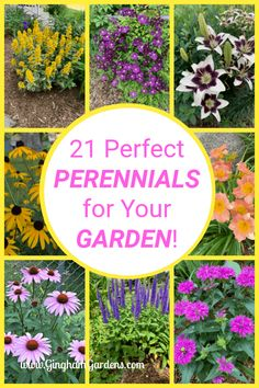 Classic Perennial Flowers are those that live longer that 2 years. They have a long bloom time, are easy to grow and get bigger and better every year. The Best Perennial Flowers that every garden needs. Perennial Flowers List, Perrenial Flowers, Long Blooming Perennials, Flowers Perennials, Perennial Gardens, Zone 4 Perennials, Best Perennials, Hardy Perennials, Biennial Plants