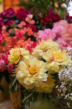 Mayfair Flower Show at Sketch London - Margarita Karenko Photography Professional Portrait, Flower Show, Blossom Flower, Lifestyle Photography, Margarita, Sketch, London, Floral, Flowers