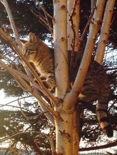 Yukarı Çıkma çabaları #cat #free #sweet