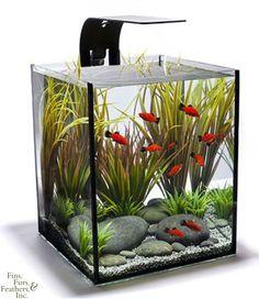 Ecoxotic EcoPico 5 Gallon Desktop Aquarium w/ LED Fixture