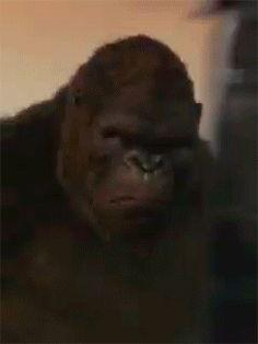King Kong Kong Skull Island The Official Movie Novelization