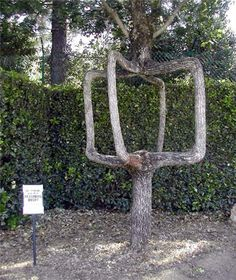 The Circus Trees were originally grown and created by Axel Erlandson, by using intricate techniques. He spent over 40 years growing his experimental tree shapes. As a result - woven wonders made from living wood.
