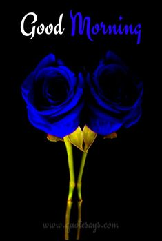 Good Morning Happy Sunday, Good Morning Cards, Good Morning Prayer, Good Morning Gif, Good Morning Greetings, Good Morning Beautiful Flowers, Good Morning Roses, Romantic Good Night, Cute Good Night
