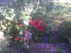 In my courtyard
