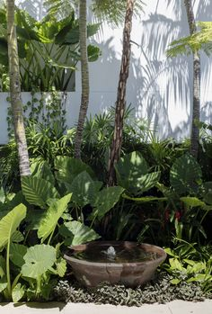 Tropical Pool Landscaping, Tropical Garden Design, Vegetable Garden Design, Tropical Plants, Garden Landscaping, Lush Garden, Water Garden, Shade Garden, Back Gardens