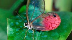 Amazing Animals From Around the World Photos - ABC News