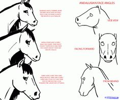 how to draw anime horses step 2 Face Angles, Face Shapes, Horse Drawings, Animal Drawings, Angular Face, Horse Ears, Andalusian Horse, Character Creation, Horse Breeds