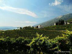 Around&AboutTreviso#Prosecco hills #Conegliano & #Valdobbiadene @TurismoVeneto