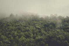 It's a Jungle Sometimes