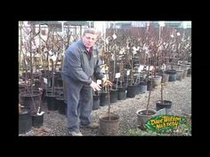Shopping For Container Fruit Trees
