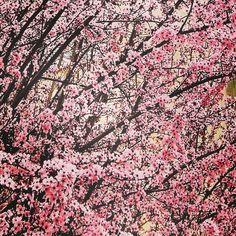Spring os coming