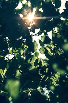 29 ideas nature aesthetic green wallpaper for 2019 Spring Photography, Art Photography, Photography Flowers, Photography Classes, Photography Lighting, Forensic Photography, Photography Camera, Photography Backdrops, Nature Aesthetic