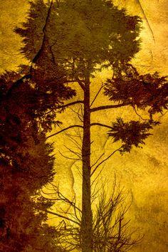 Tree Photography  Tree Art  Tree Print  Gold Wall by CANARIECRAFT