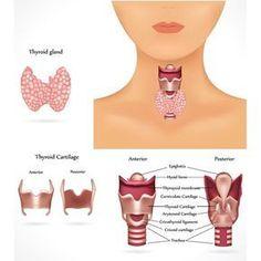 Hashimoto-Thyreoiditis - Symptome, Krankheitsbild, Schilddrüse, Hormone