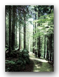 Oldrobel's Fotoreise: walk at the small Arber
