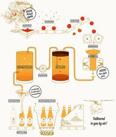 This infographic shows the basic steps involved in cider making from the orchard to the final product. This will help consumers understand the process better in an easy to read infographic.