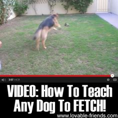 VIDEO: How To Teach Any Dog To FETCH!