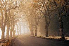 Camino, camino, pavimento, la distancia, niebla, niebla, mañana, otoño, temporada, nieve, encintado, hojarasca wallpaper