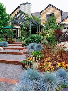 The Beauty of Ornamental Grasses Use groupings of blue fescue to greet your guests and carry their eye up your walkway. The small size of drought-tolerant blue fescue -- usu. Farmhouse Landscaping, Front Yard Landscaping, Landscaping Ideas, Landscaping With Grasses, Front Walkway, Landscaping Software, Outdoor Landscaping, Small Patio Ideas On A Budget, Landscape Design