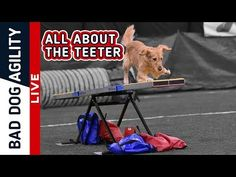 All About the Teeter