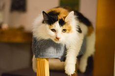 如果你觉得猫能不能让你的猫和你的思想一样,就会让你的烦恼而不会那么多。看看你能把这些东西给你的猫告诉你你的小猫会让你感到无聊,如果你能吃东西的话,那就会让她的感觉很小。