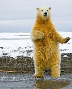 Having a little dance party...