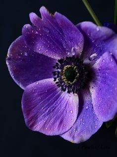 ♡ this is my favorite flower in my wedding bouquet and I think my next tattoo