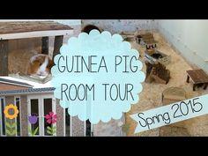 Guinea Pig Room Tour | Spring 2015 - YouTube