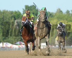 Exaggerator wins the Saratoga Special at Saratoga August 16, 2015. Coglianese Photos