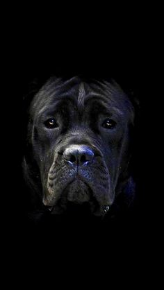 Baby looks sad ! I love you dog. One day I'm hoping to have a dog just like this one !!!