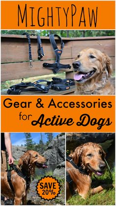Whether you are an avid walker, runner or hiker, MightyPaw has the gear you need to bring your dog along on the adventure. Their collars, hands-free leashes and harnesses look great and stand up to exercise and adventure! Click here for the full @MyDogLikes review and an exclusive 20% off coupon for the MightyPaw store!