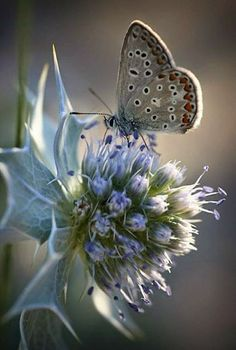 ~grateful for the beautiful butterflies that float among the flowers in the garden~ Beautiful Bugs, Beautiful Butterflies, Beautiful World, Beautiful Flowers, Simply Beautiful, Butterfly House, Butterfly Kisses, Butterfly Flowers, Blue Butterfly