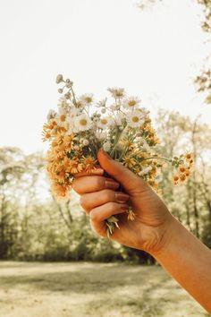 fresh field flowers