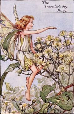 This beautiful Travellers Joy Flower Fairy Vintage Print by Cicely Mary Barker was printed and is an original book plate from the Book of The Flower Fairies. Cicely Barker created 168 flower fairy illustrations in total for her many books. Cicely Mary Barker, Fairy Pictures, Vintage Fairies, Beautiful Fairies, Flower Fairies, Fantasy Illustration, Fairy Art, Faeries, Illustrators