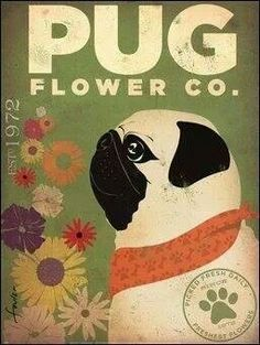 Pug Flower Co. by Stephen Fowler Art Print Poster Editions Limited Framed Art Prints, Poster Prints, Cat Prints, Framed Canvas, Posters, Canvas Prints, Pug Art, Pug Pictures, Animals