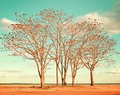 Under Scorching Skies - 8x10 Photograph - Beach Photography, Landscape, Nature, Trees, Aqua, Turquoise, Orange, Wall Art, Home Decor via Etsy
