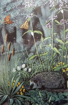 C F Tunnicliffe for Ladybird Books