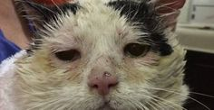 Semi-feral Cat Finds a Home with Other Kitties Just Like Him After Years Fending for Himself