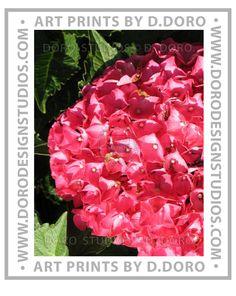 """Hydrangea in Pink"" Photography by Dan Doro. of Doro Studios — at Doro Studios. https://www.etsy.com/shop/DanDoroArtAndDesign"