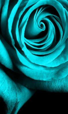 Rosa turquesa  ~✿